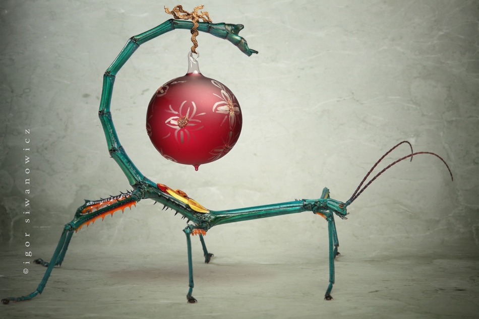 insect christmas